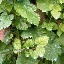 Maladies et traitement des plantes du jardin arbres - Traitement arbres fruitiers avec bouillie bordelaise ...