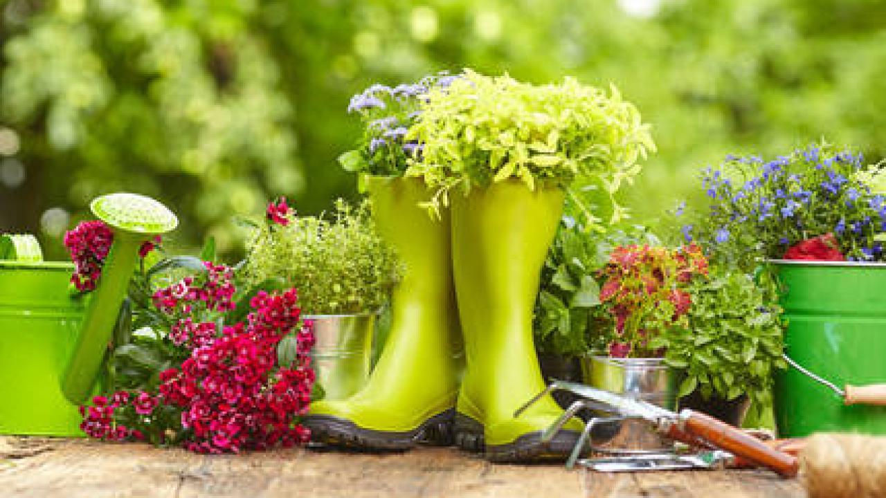 Quoi Mettre Au Potager En Septembre calendrier du jardinier en septembre, octobre, novembre et