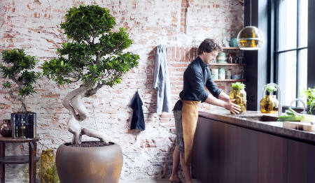 Ficus trees for all