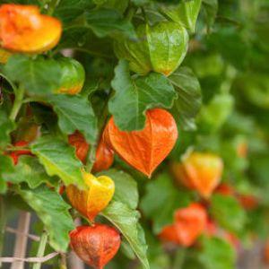 Calendrier Lunaire Graines Et Plantes Mai 2019.Graines Et Plantes Calendrier Lunaire De Mai 2018 Kaizene Org