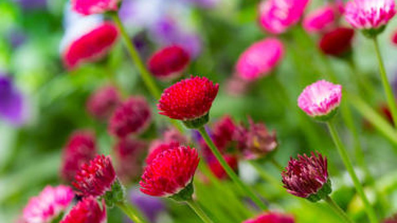 Quelle Plante En Pot Pour Terrasse chrysanthème : plantation, culture et entretien au fil des
