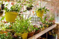 jardin hiver plantes protection