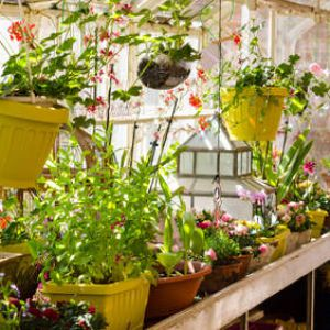 Plants to winterize protection shelter and solutions for Jardin malin