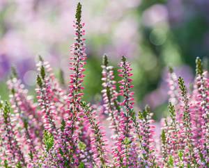 Fleurs qui fleurissent en hiver - Fleurs qui fleurissent en hiver ...