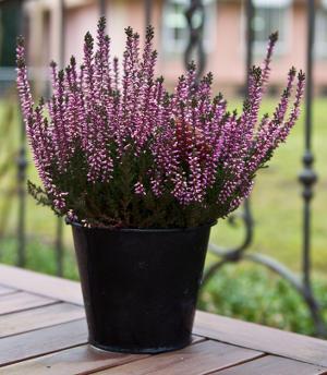 Les Fleurs Arbustes Et Plantes D Hiver Pour Jardiniere
