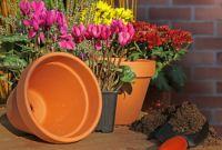 fleurs hiver jardinière