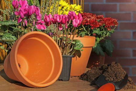 Jardiner malin jardinage et recettes de cuisine for Www jardiner malin fr