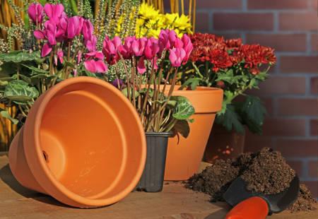 les fleurs et plantes d 39 hiver pour jardini re. Black Bedroom Furniture Sets. Home Design Ideas
