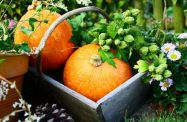 travaux automne potager jardin