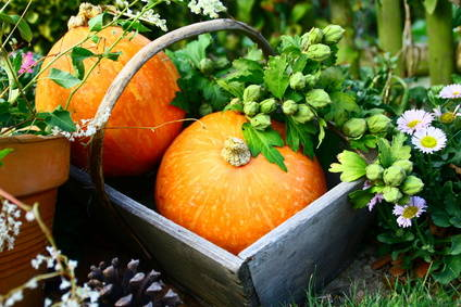 Fall, Autumn, the ideal season to prepare your garden