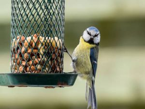 des abris pour les petits animaux oiseaux et insectes au jardin. Black Bedroom Furniture Sets. Home Design Ideas