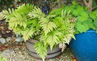 plantes pour l'hiver