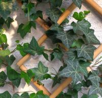 plantes hiver