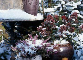 des fleurs pour des jardini res d 39 hiver. Black Bedroom Furniture Sets. Home Design Ideas