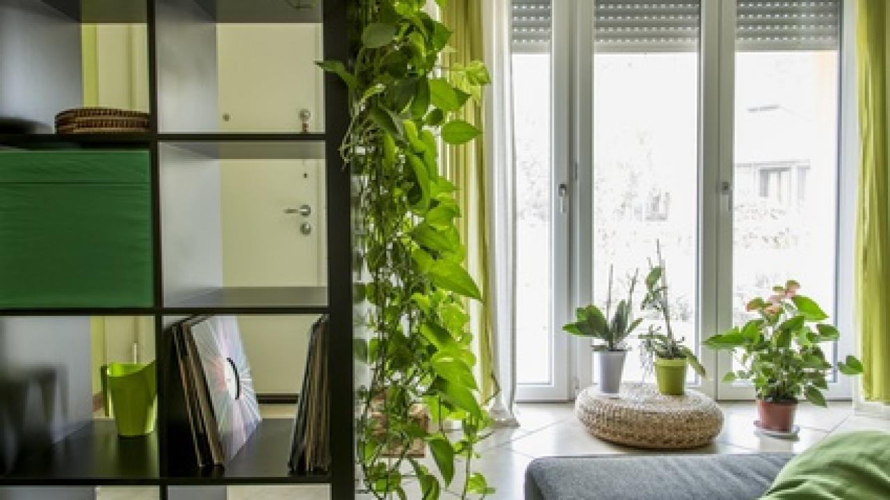 Plante Pour Salle De Bain Sombre des plantes pour chaque pièce de la maison