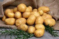 Pomme de terre plantation culture r colte et maladies - Comment conserver les pommes de terre ...