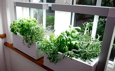 Indoor vegetable patch, straightforward and effective