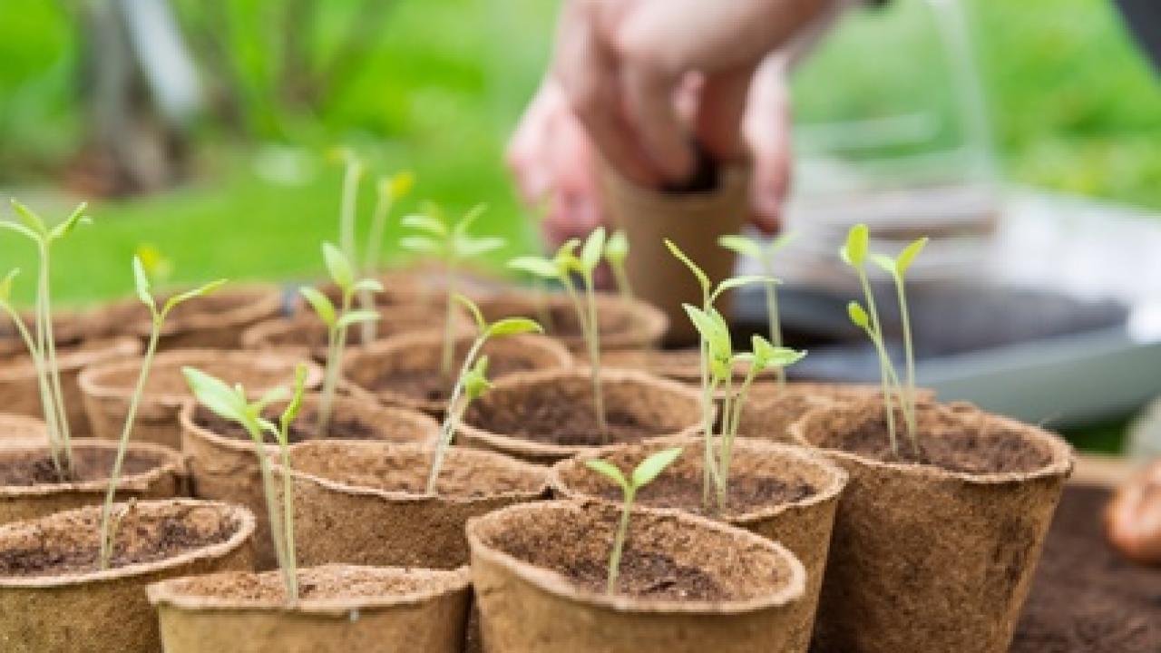 Que Faire Au Jardin En Janvier calendrier des semis et récoltes au potager