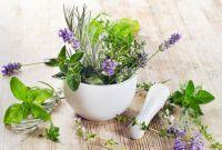 migraine et plantes
