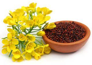 Moutarde sante bienfaits vertu