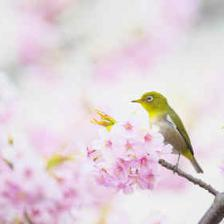 arbre a fleurs printemps