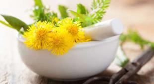 calcul urinaire plantes
