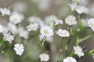 fleur legere