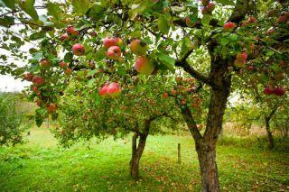 traitement fruitier