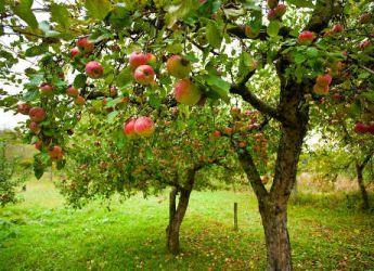 Des arbres fruitiers soigner traitement et soin - Traitement arbres fruitiers ...