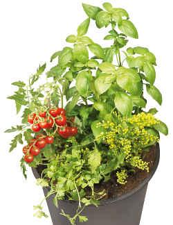 pot a planter