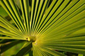 palmier_interieur