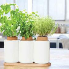 Growing vegetables with ready-made kits