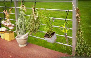 furoncle et plantes