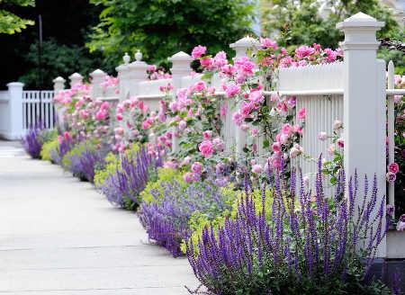 parterre fleuri toute l année – idée d'image de fleur