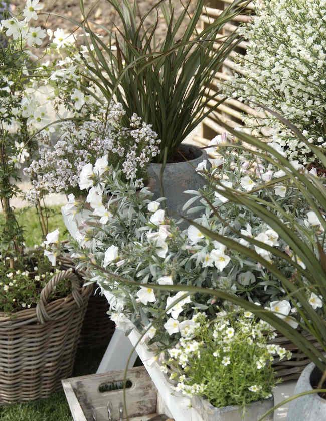 Plantes pour terrasse balcon cour ou petit jardin for Petit gravillon pour cour