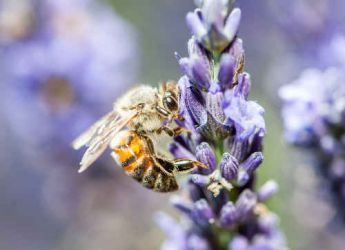 comment prot ger les abeilles au jardin. Black Bedroom Furniture Sets. Home Design Ideas