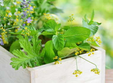 Nephritis, how can plants be used to treat it?