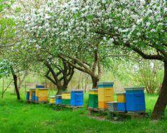 proteger abeilles ruche