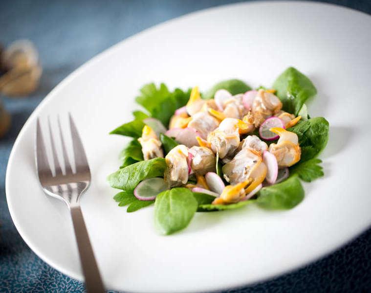 salade coque radis herbe