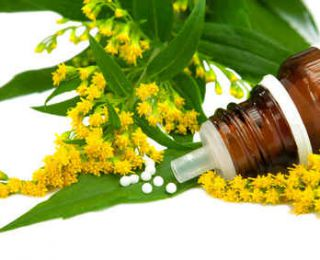 solidago - verge or