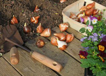 Plantations et semis d automne les conseils pour r ussir for Conseil plantation jardin