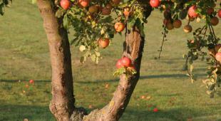 fruitier en hiver