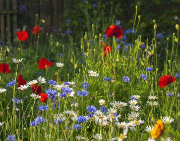 plantes jardin naturel