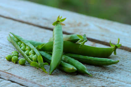 Peas and green peas, growing them from seed to harvest