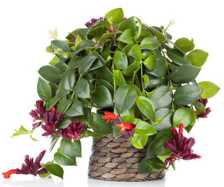 jolie plante verte - fêter Noël autrement