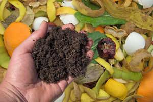 compost jardinage bio