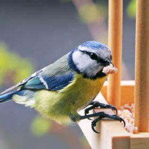 Nourrir les oiseaux en hiver - Faire peur aux oiseaux jardin ...