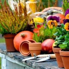 travaux jardin automne