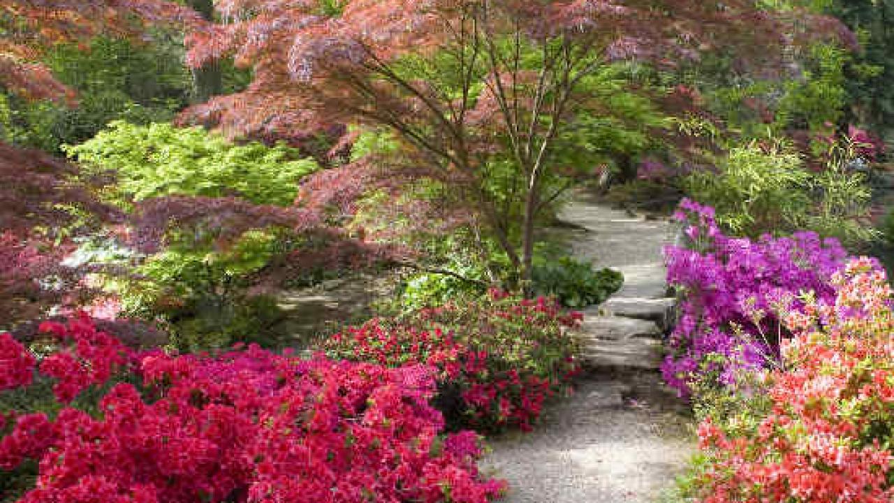 100 Fantastique Suggestions Fleur Pour Jardin Japonais