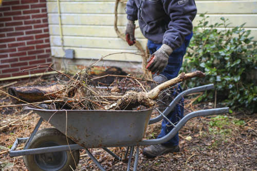 Winter, time to clean and organize your garden